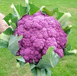 Bloemkool 'Violetto di Sicilia' (zaden)