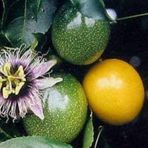 Passiflora e. flavicarpa (10 zdn)