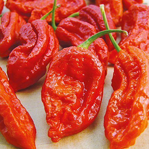 Peper 'Bhut Jolokia Red' (zaden)